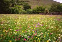 Hay Meadow in flower von Mark Lucock