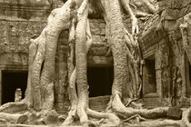 Tree Roots Engulfing Ancient Ruins of Ta Prohm by Mark Lucock