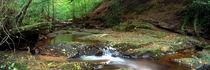 Small cascade in woodland near Goathland by Mark Lucock