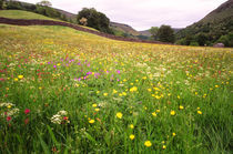 Hay Meadow in flower by Mark Lucock