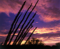 Ocotillo Sunset by Mark Lucock