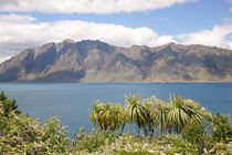 Lake Hawea and Cabbage Trees by Mark Lucock