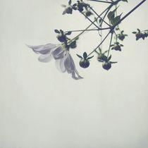 Himalayan rose by Tom Lemisiewicz
