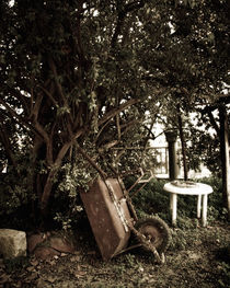 old wheelbarrow in a garden von George Panayiotou