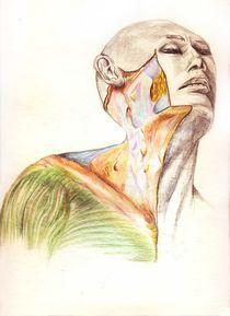 Anatomia-b