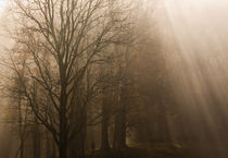USA Great Smoky Mountain NP Tennessee trees in fog with rays of light by Danita Delimont
