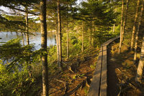 A wooden walkway in Acadia National Park Maine USA by Danita Delimont