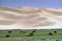 Wild horses by Danita Delimont