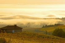 Autumn morning fog in Pouilly-Fuissé vineyards by Danita Delimont
