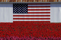 Flag painted on barn and tulip field von Danita Delimont