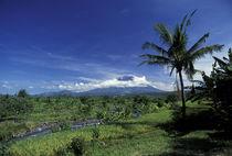 Mount Agung by Danita Delimont