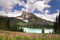View of Emerald Lake and surrounding wilderness von Danita Delimont