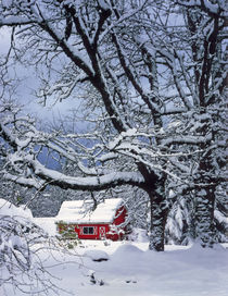 Fresh snow covers landscape and red barn by Danita Delimont