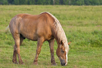 Horse in field by Danita Delimont