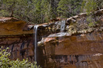 Water Falls at the Lower Emerald Pools by Danita Delimont