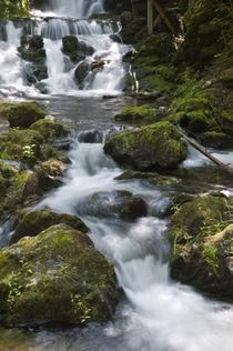 Dickson Falls in Fundy National Park von Danita Delimont