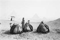 Camel Jockeys Giza Pyramids (NR) von Danita Delimont