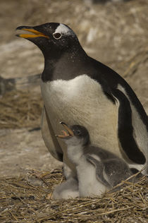 Falkland Islands by Danita Delimont
