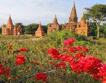 A Bagan temple complex von Danita Delimont