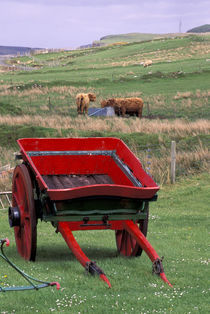Farm animals and wheelbarrow by Danita Delimont