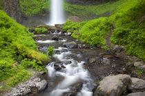 Latourell Falls and Latourell Creek by Danita Delimont