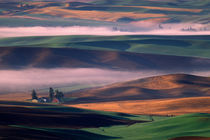 Steptoe Butte view of fog and white barn in green and brown Palouse hills von Danita Delimont