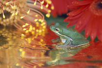 Frog and reflections among flowers by Danita Delimont