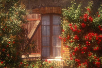 House with summer roses in bloom von Danita Delimont