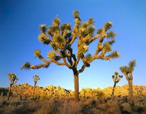 Mojave Desert von Danita Delimont