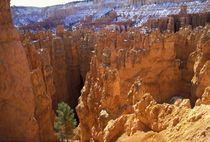 High on the Navajo Loop trail von Danita Delimont