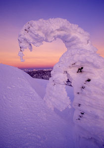 Snowghost in the Whitefish Range at Twilight in Montana by Danita Delimont