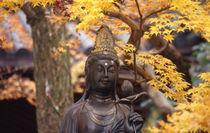 Buddha by Danita Delimont