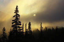 Cloudy sunrise silhouettes spruce and fir trees on Continental Divide by Danita Delimont