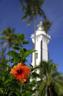 Hibiscus in front of Venus Point Lighthouse (aka Pointe Venus) by Danita Delimont