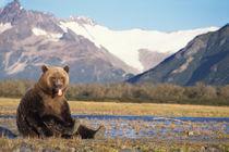 Katmai National Park on the Alaskan peninsula von Danita Delimont