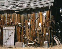 Old livery stable barn with animal skull decorations by Danita Delimont