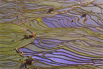 Flooded Tiger's Mouth (Mengpin) terraces reflect blue sky by Danita Delimont