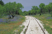 Blue bonnets and abandoned rails von Danita Delimont