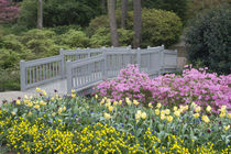 And varied spring flowers along a garden path von Danita Delimont