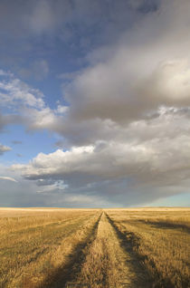 Stand Off: Landscape with Dramatic Sky Wheat Field Road von Danita Delimont