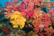 Rainbow Reef in Taveuni by Danita Delimont