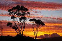 Australia by Danita Delimont