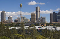 Sydney skyline by Danita Delimont