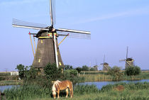 Kinderdijk windmills and horse von Danita Delimont