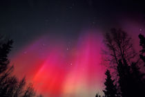 Curtains of pink and red Northern Lights above central Alaska by Danita Delimont