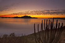 The sunrise over Isla Danzante in the Gulf of California from near Loreto Mexico by Danita Delimont