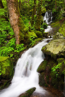 USA; Tennessee; Great Smoky Mountain NP; Cascade at Tremont by Danita Delimont