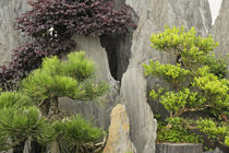 Noted for many bonsai trees by Danita Delimont