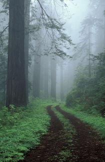 Old Highway 101 with Coast Redwoods von Danita Delimont