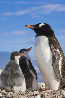 Antarctica by Danita Delimont